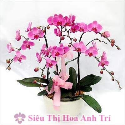 chau-lan-ho-diep-hong-5-canh